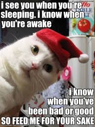 Merry Christmas Cat Meme - 1447 best christmas cats images on pinterest christmas animals