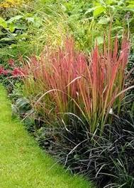 best 25 grass ideas on drought tolerant grass