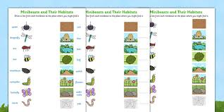 minibeasts and their habitats worksheet minibeast habitats