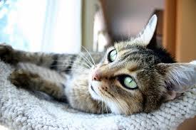cat behavior cat kisses how a cat can show affection