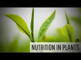 nutrition in plants and modes of nutrition in plants youtube