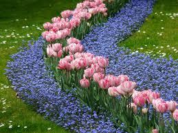 wall flowers plant out biennial wallflowers news ardcarne garden centre