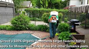 backyard mosquito control natural home outdoor decoration