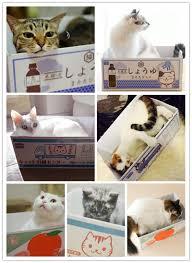 Cardboard Cat Scratcher House Design For Cats Cute Box House With Corrugated Scratch Board