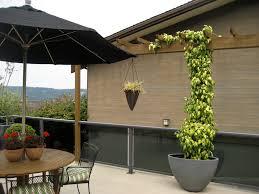 potted ivy along deck trellis i was informed by another ga u2026 flickr