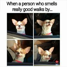 Really Good Memes - smelling good funny pictures quotes memes funny images funny