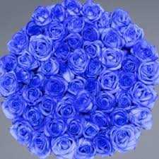 white and blue roses royal blue small square white box legendary roses