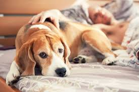 Good Backyard Pets 50 Secrets Your Pet Won U0027t Tell You Reader U0027s Digest