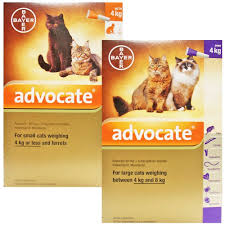advocate flea and wormer spot on for cats buy online