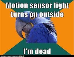 Paranoid Parrot Memes - animal memes paranoid parrot mission failed rub mint