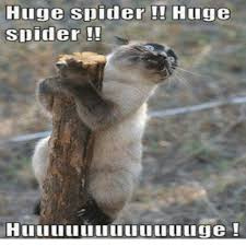 Funny Spiders Memes Of 2017 - funny spider meme funny memes