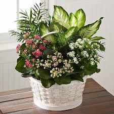 funeral plants funeral plants online send funeral plant arrangements