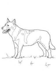 dog colouring picture animals coloring pages pinterest dog