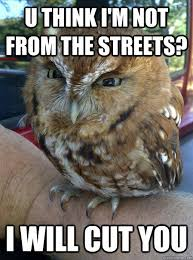 Outrageous Memes - u think i m not from the streets i will cut you outrageous owl