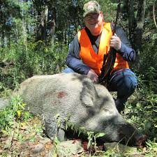 Pennsylvania Wildlife images Pennsylvania hunting tioga boar hunting jpg