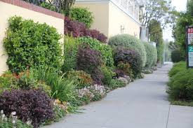 San Francisco Urban Garden - best curb appeal 2017 katharine webster u0027s san francisco street