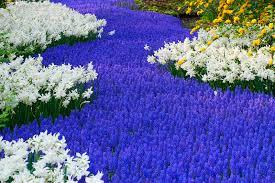 Beautiful Flowers Image Beautiful Flower Garden Wallpapers Wallpapersafari