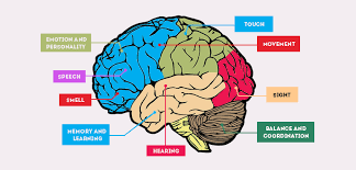 interesting brain facts for facts about human brain