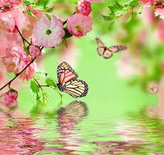 flowers flowers delicate beautiful pink water bloom