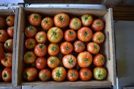 Gardening Tips For Summer - 3 tips for summer gardening with jones valley teaching farm shipt