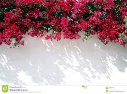wall flowers wall with flowers royalty free stock images image 293359