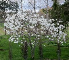 the value of small ornamental trees rooting for ideas