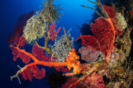 pristine seas national geographic society