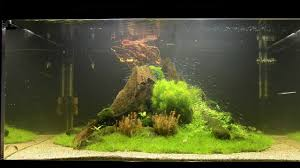 Japanese Aquascape by Aquascape Tutorial
