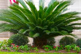 best types of palm trees for outside landscaping design