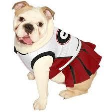 English Bulldog Halloween Costumes Bulldog Halloween Costumes Collection Ebay