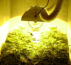 250 watt hid grow lights autoflower growing with hps bulbs