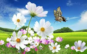 beautiful flowers pictures india youtube