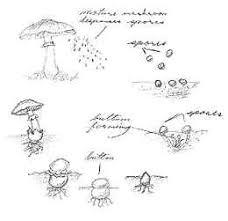 u haul supergraphics the parts of a mushroom