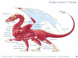 dragon physiology here be dragons draconian com