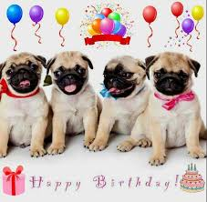 Pug Birthday Meme - happy birthday pugs pinterest happy birthday and birthdays