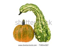 decorative gourd stock images royalty free images vectors
