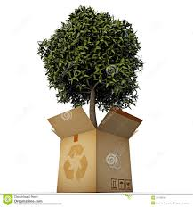 green tree in a box stock photo image 31743840