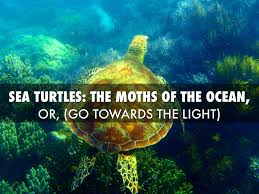 sea turtles the moths of the ocean class copy by avi