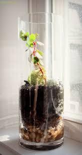 how to make a glass terrarium u2022 craft thyme