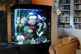 custom fish tank decorations photo albums fabulous homes