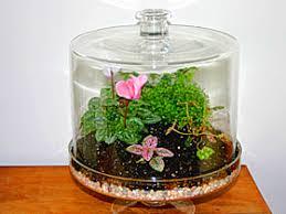 building a terrarium garden org