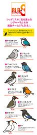 listbirds более 25 лучших идей на тему каштановый коричневый на pinterest