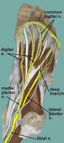 Nerves In The Knee Anatomy Sole Of Foot