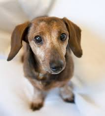 Good Backyard Pets Dannipdx Foster Dogs