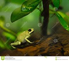 Cute Plant by Cute Little Tree Frog Under A Plant Stock Photo Image 55956754