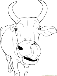 cattle coloring pages cow picture of cowboy on horse a animal