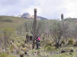 juntas salento trek los nevados national park 7 day trip ifmga