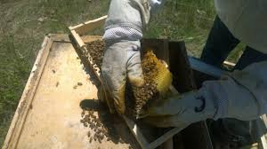 beekeeping u2013 my adventures in beekeeping