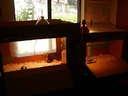 reasons for tossing out your indoor brooder and start raising your