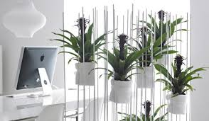 best office plants nz new zealand designer patrick morris has